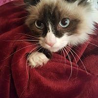 Adopt A Pet :: Micha - Rosemead, CA