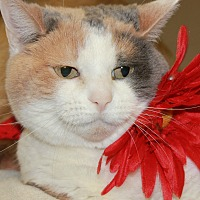 Adopt A Pet :: SUGAR - Clayton, NJ