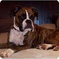 Adopt A Pet :: Raisin - Thomasville, GA