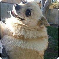 Adopt A Pet :: Choo-Choo - West Hills, CA