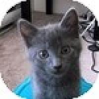 Adopt A Pet :: Romey - Vancouver, BC