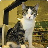 Adopt A Pet :: PJ - Warminster, PA