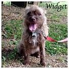 Adopt A Pet :: Widget
