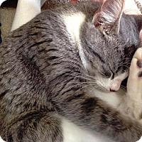 Adopt A Pet :: Naomi - St. Louis, MO