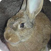 Adopt A Pet :: Annabelle - Waupaca, WI