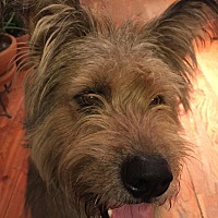 Terrier (Unknown Type, Medium) Mix Dog for adoption in Colorado Springs, Colorado - Maximillian