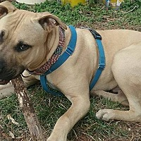 Adopt A Pet :: Ernesto - Chalfont, PA