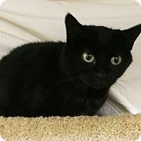 Adopt A Pet :: Baby - N. Billerica, MA