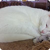 Adopt A Pet :: Billie - Diamond Springs, CA