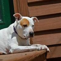 Adopt A Pet :: Kimmie *Foster* - Glen Allen, VA