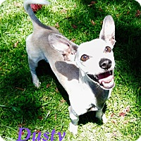 Adopt A Pet :: Dusty - El Cajon, CA