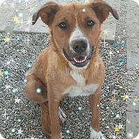 Adopt A Pet :: Rhys - Castaic, CA