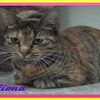 Adopt A Pet :: FIONA - Fort Walton Beach, FL