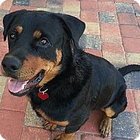 Adopt A Pet :: Ranger - Pembroke Pines, FL