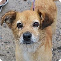 Adopt A Pet :: Pearl - Minneapolis, MN