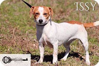 Dachshund Mix Dog for adoption in DeForest, Wisconsin - Issy