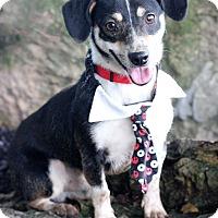 Adopt A Pet :: Rocket - Dalton, GA