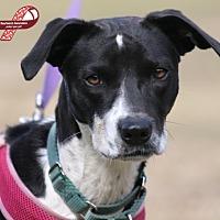Adopt A Pet :: Myra - North Fort Myers, FL