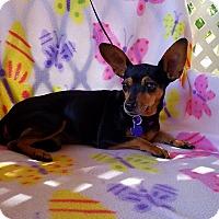 Adopt A Pet :: Royal - Danbury, CT