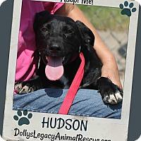 Adopt A Pet :: HUDSON - Lincoln, NE