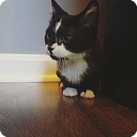 Adopt A Pet :: Webber - Lexington, KY