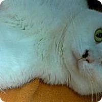 Adopt A Pet :: Pesto - Richboro, PA