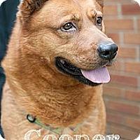Adopt A Pet :: Cooper III - Salem, OH