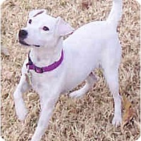 Adopt A Pet :: SANTO - Phoenix, AZ