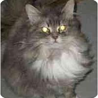 Adopt A Pet :: Cashmere - Strathmore, AB