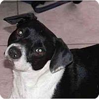 Adopt A Pet :: Chester - Miami Beach, FL