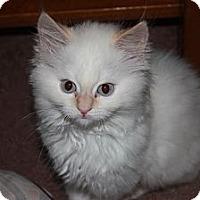 Adopt A Pet :: Aspen (LE) - Little Falls, NJ