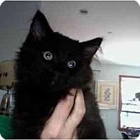 Adopt A Pet :: Ozzy - New York, NY