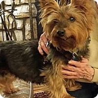 Adopt A Pet :: Charlie - Wilmington, DE