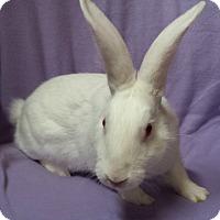 Adopt A Pet :: Foxy - Williston, FL