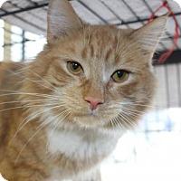 Adopt A Pet :: Egore - Hamilton, ON