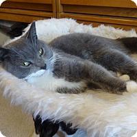 Adopt A Pet :: Pewter - Colmar, PA