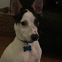 Adopt A Pet :: Lupin/Cp - Columbia, TN