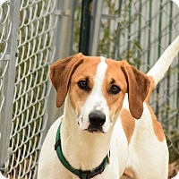 Adopt A Pet :: Coors - Meridian, ID