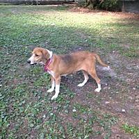 Adopt A Pet :: Clover Leigh - Glen St Mary, FL