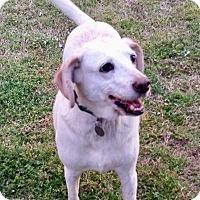 Adopt A Pet :: Marlina - Virginia Beach, VA