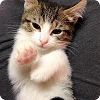 Adopt A Pet :: Belle - River Edge, NJ