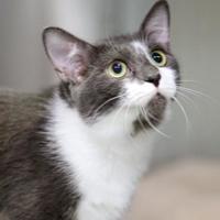 Adopt A Pet :: Harmony - Charleston, SC
