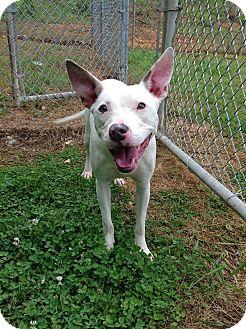 Terrier (Unknown Type, Medium) Mix Dog for adoption in Homewood, Alabama - Tildy