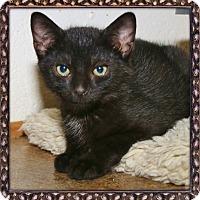 Adopt A Pet :: Climber - Shippenville, PA