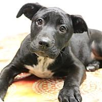 Adopt A Pet :: Cloe - Hagerstown, MD
