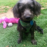 Adopt A Pet :: Billy - East Hartford, CT
