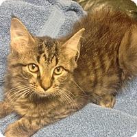 Adopt A Pet :: Harry - Lincolnton, NC