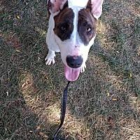 Adopt A Pet :: Bubbles - Denver, CO