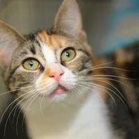 Adopt A Pet :: Olivia - Baton Rouge, LA