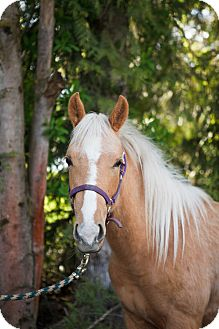 Quarterhorse Mix for adoption in Gresham, Oregon - Faith